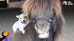 Dog and Horse Best Friends Are Inseparable | The Dodo
