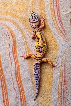 I don't like reptiles, but...Cool! Leopard Gecko On Rainbow Slate —