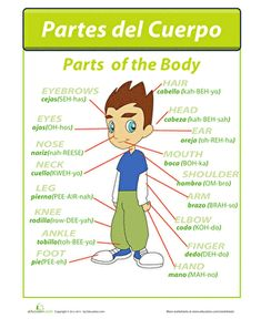 """Learn los partes del cuerpo, or """"parts of the body"""" in Spanish! Students can practice the spelling and proper pronunciation of the basic body parts with this helpful diagram. Spanish Words For Kids, Spanish Help, Learn Spanish Free, Learning Spanish For Kids, Spanish Language Learning, Teaching Spanish, Foreign Language, Spanish Games, Language Lessons"""