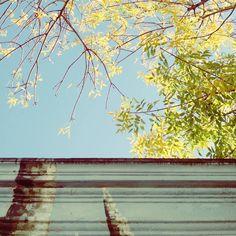 """All that we see or seem is but a dream within a dream."" #poe #edgarallanpoe #instapic #instaphoto #instashot #fall #sky #ciel #cielo #lightblue #celeste #instasky #autumn #automne #yellow #trees #arbres #leaves #feuilles #urbanlife #urbanjungle #wanderer #citylife #city #urban #beauty #sunnyday #up #poetry #picoftheday #devoto #buenosaires #Argentina    (en Villa Devoto, Buenos Aires, Argentina)"
