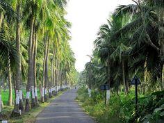 Kanyakumari-Tamilnadu-India Kanyakumari, Roads, The Dreamers, Destinations, Sidewalk, Africa, Ocean, Indian, Island