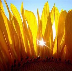 The Good Father | Reverse Ritual Amazing Photography, Art Photography, Beautiful Flowers, Beautiful Pictures, Sunflowers And Daisies, Wildflowers, Sun Flowers, Flower Petals, Shades Of Yellow