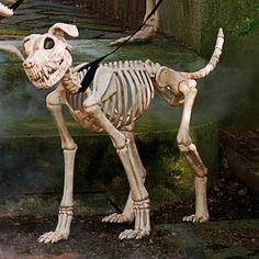 Shadow the Skeleton Dog on Leash Outdoor/indoor Halloween Decor Scary Pet New First Halloween, Dog Halloween, Halloween Skeletons, Halloween House, Halloween Ideas, Happy Halloween, Scary Halloween Decorations, Halloween Displays, Scary Haunted House
