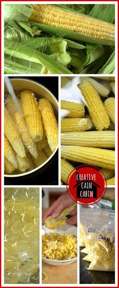 How to Freeze Sweet Corn in 6 easy steps.