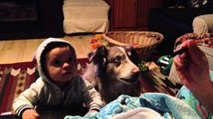 Vocal Dog Says 'Mama' Before Human Toddler Can Respond to His Mother's Request