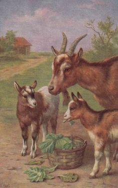 Goats...Edgar Hunt