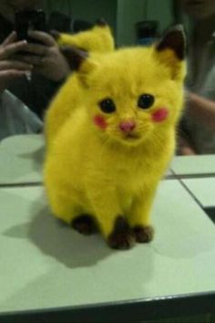 this is too stinkin cute!!!  i used to love this pokemon! (: