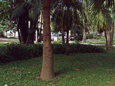Cada árvore no seu parque