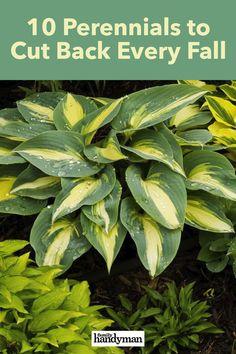 10 Perennials You Should Cut Back Every Fall