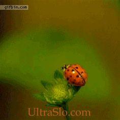 How ladybugs fly