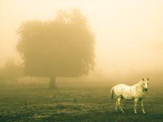 Le cheval blanc dans le mauvais temps by Lucien Vatynan on 500px