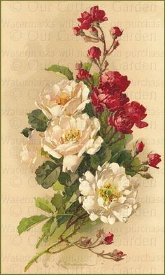 """Red & White Roses"" - Catherine Klein"