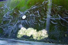 art urbain original nouvelles techniques graffiti ecologique mousse vegetale