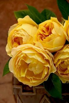 """you can find this one in the garden: David Austin English Rose """"Graham Thomas"""" Love Rose, My Flower, Pretty Flowers, Fresh Flowers, Cactus Flower, Exotic Flowers, Ronsard Rose, David Austin Roses, David Rose"""