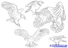 how to draw eagles | how to draw eagles, draw bald eagles step 4