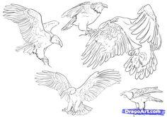 how to draw eagles | how to draw eagles, draw bald eagles step 4