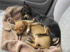this reminds me of my two chihuahuas they love to ride and sleep in the front seat!
