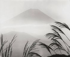calm in trees Black White Photos, Black And White Photography, Mount Fuji, Japanese Art, Opera, Art Photography, Tapestry, Earth, In This Moment
