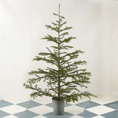 Sustainably harvested from a Colorado mountainside, this fragrant, full-size Subalpine fir arrives at your doorstep fresh and ready for decorating. Subalpine firs have a remarkably open and wild form, with smaller needles in a cool shade of blue-green.- Fresh cut Subalpine fir tree- Width will vary- Tree only; bucket and stand not included- Colorado6'HPlease note: this item will begin shipping the week of 11/24.