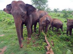 Udawalawe National Park Photo Diary - The Aussie Flashpacker Beautiful Birds, Animals Beautiful, Wild Elephant, River Bank, Photo Diary, African Safari, Bird Species, Elephants, Sri Lanka