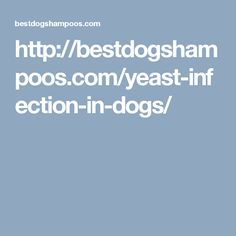 http://bestdogshampoos.com/yeast-infection-in-dogs/