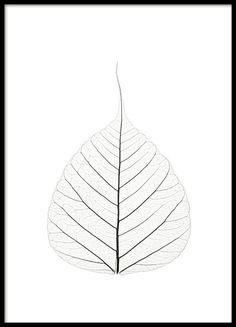 Skeleton leaf, affiche dans le groupe Affiches / Formats / 50x70cm chez Desenio AB (7909)