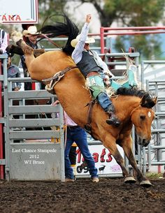 Bareback Bronc rider at the Last Chance Stampede in Helena Montana.