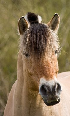 A portrait of a rather lovely horse...good hair day