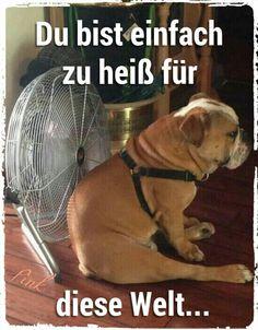 #Bulldogge