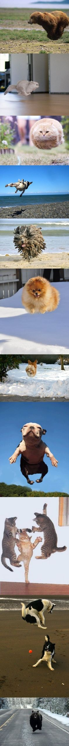 Airborne Pets & Animals. #pets #animals #funnypets @Jenna Davey the 5th one down looks like the scary dogs from willow...
