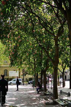 Place Saint Sulpice, Paris