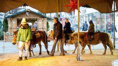 Jetzt soll sogar Pony-Reiten auf Straßenfesten verboten werden