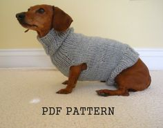 Sweater Pattern for Mini Daschaunds, Doxie, Dachshund, Knitted Dog Sweater, Small Dog