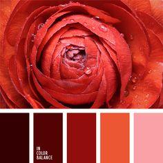 burdeos, color rojo vino, elección del color, escarlata, paleta de colores monocromática, paleta del color rojo monocromática, rojo naranja, rosado y rojo, selección de colores para artículos textiles, selección de colores para un salón, tonos rojos.