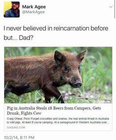 True Aussie pig, true Aussie bloke
