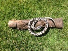 Fake Snake On A Log  Startle Cache by CachingCousins on Etsy.