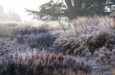 Piet Oudolf landscape design, Trentham. Still beautiful in autumn/winter.