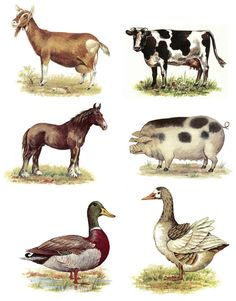 Farm Animals Select-A-Size Ceramic Decals. Wonderful collection of farm animals in beautiful colors. Farm Animals, Animals And Pets, Cute Animals, Miniature Plants, Animal Projects, Cute Animal Drawings, Baby Art, Horse Farms, Animal Pictures