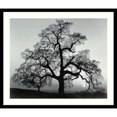 """Features:  -Title: Oak Tree, Sunset City, California, 1962.  -Artist: Ansel Adams.  Subject: -Landscape and nature.  Gender: -Neutral.  Size: -Medium 25""""-32"""".  Style (Old): -Contemporary.  Color: -Bla"""