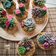 "Cactus&Succulent cupcakes. Done by my student  Such a happy time !!! Obrigado !!! Thank you "" Isa Macedo "" From Brazil for happy time with you. I will remember, we met on Valentine's day. Study with me in Bangkok  #butterblossoms #flowerscake #flowercakeclass #cakeflowers #cakeinspiration #cupcakeflowers #brazil #castus #succulents #partycupcakes #buttercreamflower"
