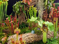 TROPICAL PLANTS | Plant Sale Presented by the Tropical Fern & Exotic Plant Society- June ...