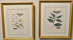 """John Abbot (1751-1839)  pair of hand colored aquatint engravings  Sphinx Vitis, Painted Hawk-Moth  Plate #40  and  Sphinx Chionanthi, Fringe-Tree/hawk/moth  Plate #34  From """"The [...more]  Estimate: $400 - $800"""