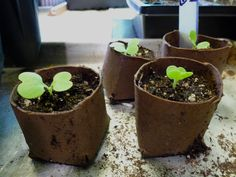 Cheap and easy seed starter containers