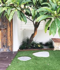 Bali Feels how beautiful is this garden by Small Tropical Gardens, Tropical Backyard, Tropical Landscaping, Front Yard Landscaping, Bali Garden, Garden Beds, Patio Plants, Cool Plants, Beach Gardens