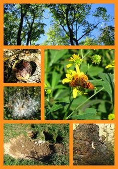 Early Fall Nature Study Ideas from Our Journey Westward