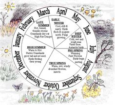 aboriginal calendar seasons activities for kids Aboriginal Education, Indigenous Education, Aboriginal History, Aboriginal Culture, Aboriginal Art, Seasons Activities, Activities For Kids, Seasons Chart, Naidoc Week