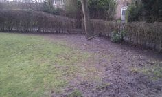 Before leaf removal priory rd