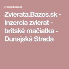Zvierata.Bazos.sk - Inzercia zvierat - britské mačiatka - Dunajská Streda