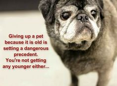 Giving up a pet because it is old is setting a dangerous precedent. Your not getting any younger either...