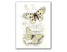 Amazing Butterflies #vintage illustration by DejaVuPrintStore, $11.90 #681team http://www.etsy.com/treasury/OTg5MzY4OHwyNzIzMjkyMTIw/white-autumn
